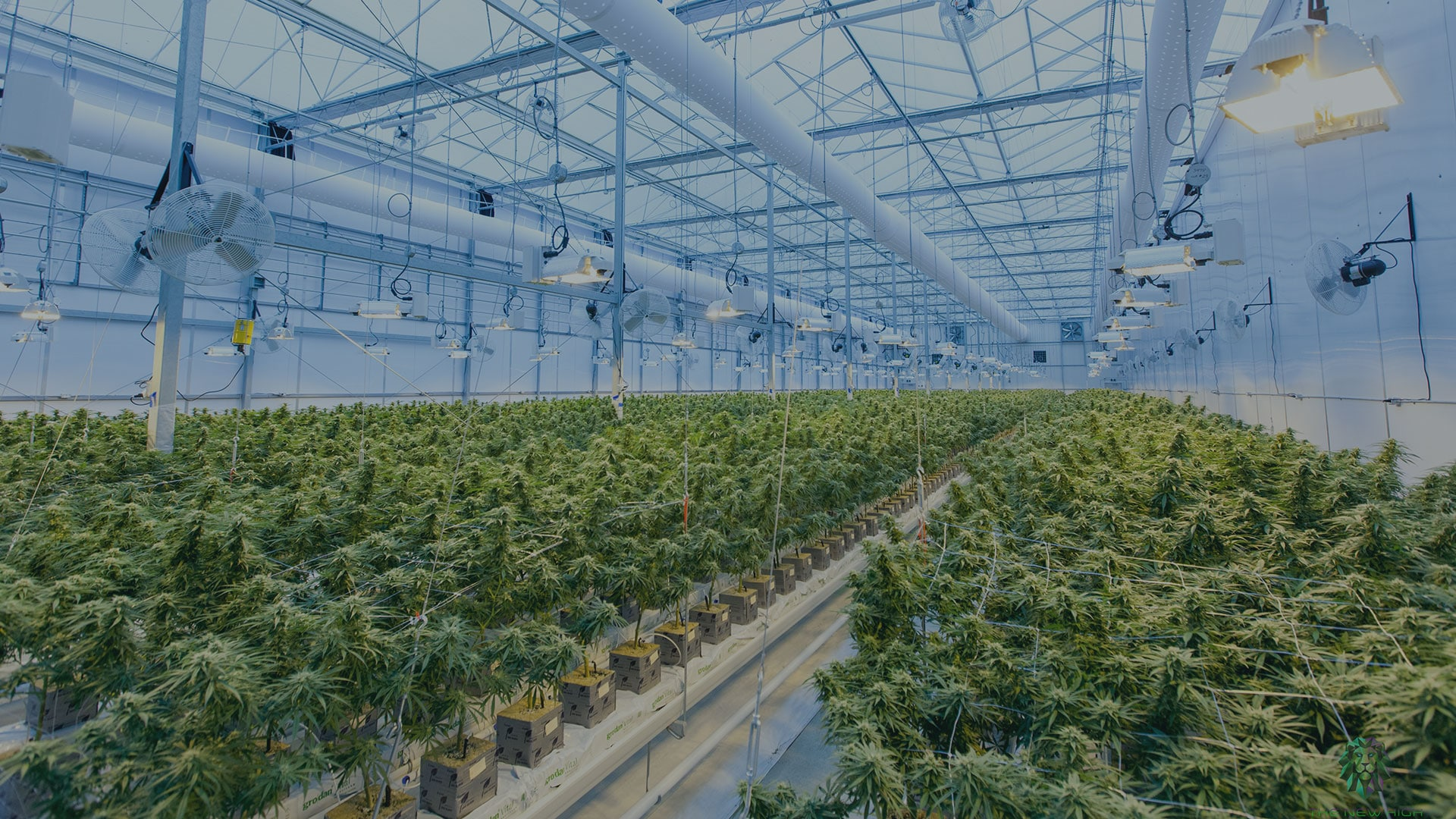 Seed-to-sale Tracking: How Does It Help Cannabis?